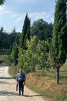 Italien, Toskana, Castello Sorci, Zypressenallee