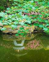 Snow viewing lantern (hakkaku yukimi) lit by candle and reflected in water with pink blooming azalea in Strolling Pond Garden (chisen kaiyu shiki niwa) of the Portland Japanese Garden