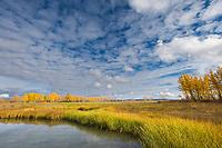 Hot springs ponds in Pilgrim Hot Springs, Seward Peninsula, western Arctic, Alaska.