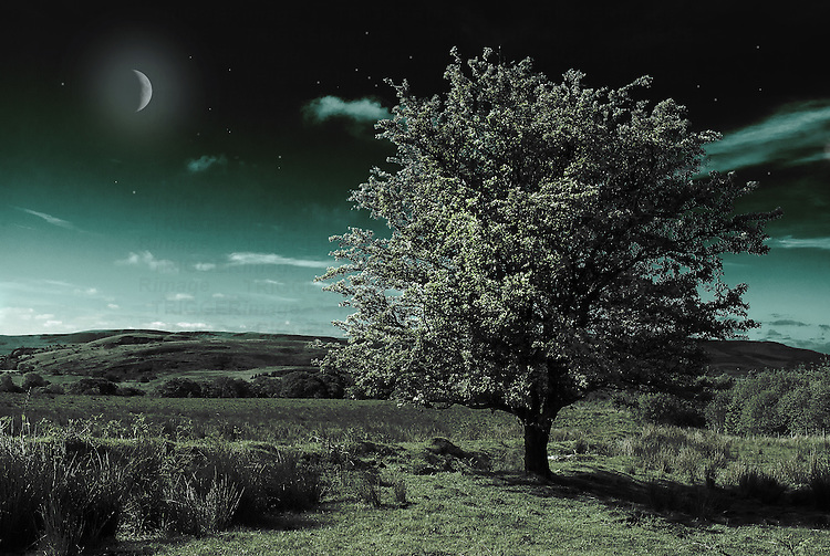 Night landscape scene with a tree in blossom under a dark nights sky with moon and stars
