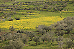 Israel, Upper Galilee, Wadi Gush Halav