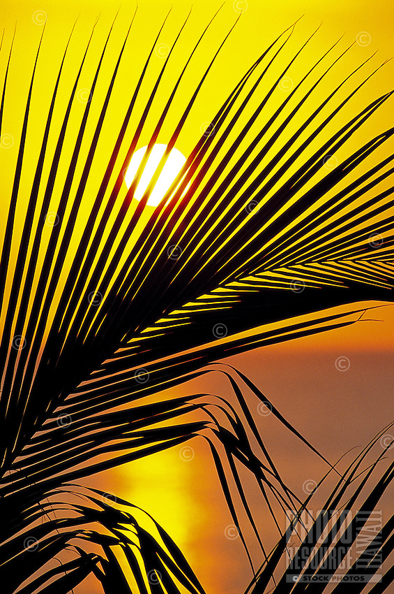 Tropical sunset with silhouetted palm leaf