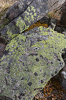 Green lichen on rocks, Brooks Range, Gates of the Arctic National Park, Alaska.