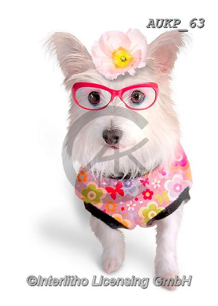Samantha, ANIMALS, REALISTISCHE TIERE, ANIMALES REALISTICOS, funny photos, photos+++++,AUKP63,#a#, EVERYDAY ,party