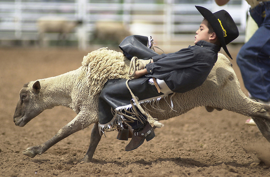 A young cowboy rides a sheep in a mutton bustin competition in Durango, Colorado in the August, 2002.