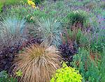 Vashon-Maury Island, WA<br /> Driscoll garden, hillside garden bed with mounded patterns of Spanish lavender, ornamental grasses and heuchera