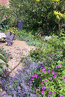 Geranium and Nepeta catmint  in cottage garden with house, table and chairs, shrubs, herbs, mixture of flowers and foliage, lavender and  purple color theme