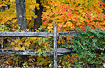 Colorful Fall Foliage And An Old Wooden Fence During Autumn In The Park, Sharon Woods, Southwestern Ohio