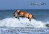 Bob, ANIMALS, collage, horses, photos(GBLA628,#A#) Pferde, caballos