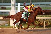 HALLANDALE BEACH, FL - FEBRUARY 04:  Irish War Cry (NJ) #5 with jockey Joel Rosario on board wins the Lambholm South Holy Bull Stakes G2 at Gulfstream Park on February 04, 2017 in Hallandale Beach, Florida. (Photo by Liz Lamont/Eclipse Sportswire/Getty Images)