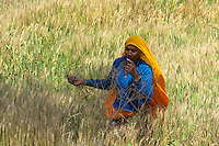 Rural and agriculture in remote parts of Rajasthan, India