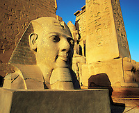 Carved head of King Rameses II in early morning sunlight with inscribed column and other carvings behind at Luxor Temple, Luxor, Egyp