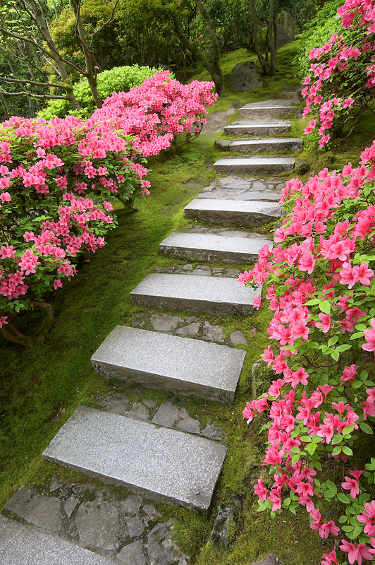 Japanese Garden with blooming rhododendrons and path. Portland. Oregon