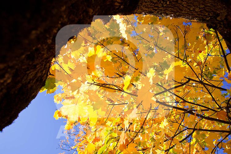 12.10.2010, Kaprun und Umgebung, AUT, Herbstfeatures, im Bild ein Baum mit gelben Blättern, EXPA Pictures © 2010, PhotoCredit: EXPA/ J. Feichter
