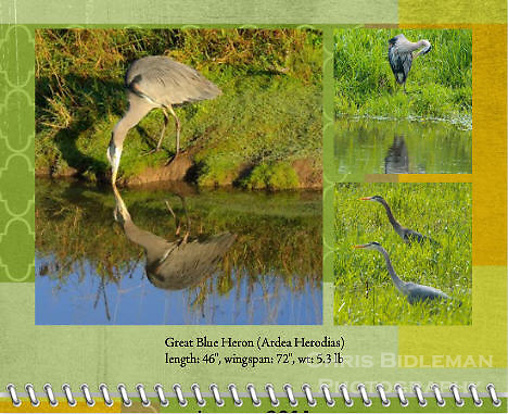 January 2011 Birds of a Feather Calendar