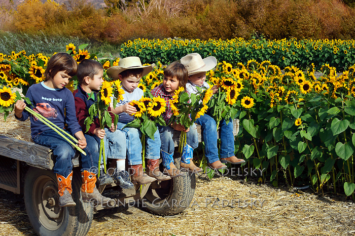 Cousins at the sunflower field, Avila Valley, San Luis Obispo County, California.(Bode, Peyton, Ethan, Cash, and Evan)