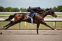 #57Fasig-Tipton Florida Sale,Under Tack Show. Palm Meadows Florida 03-23-2012 Arron Haggart/Eclipse Sportswire.