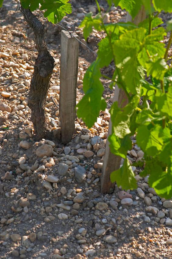Detail of the sandy and Gravely soil at Chateau Cos d'Estournel Saint Estephe Medoc Bordeaux Gironde Aquitaine France