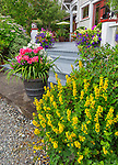 Vashon-Maury Island, WA: Colorful pots at the base of the steps to house and cottage garden