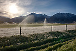 Idaho, South Central, Custer County, Mackay. Irrigation water freezes to the grass and fenceline in front of the Lost River Range in morning of the first day of summer 2019.
