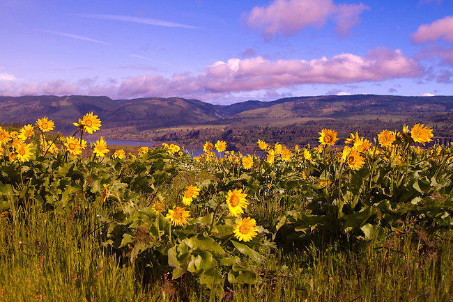 Tom Mccall Preserve, Oregon.