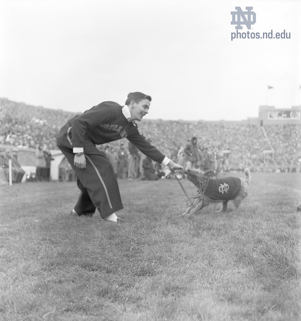 GMCJ 1/33:  Football Game Day - Notre Dame vs. Pittsburgh, 1950/1111.  A male cheerleader playing tug-o-war with Irish Terrier dog mascot Shannon View Mike? on the sidelines..Image from the University of Notre Dame Archives.
