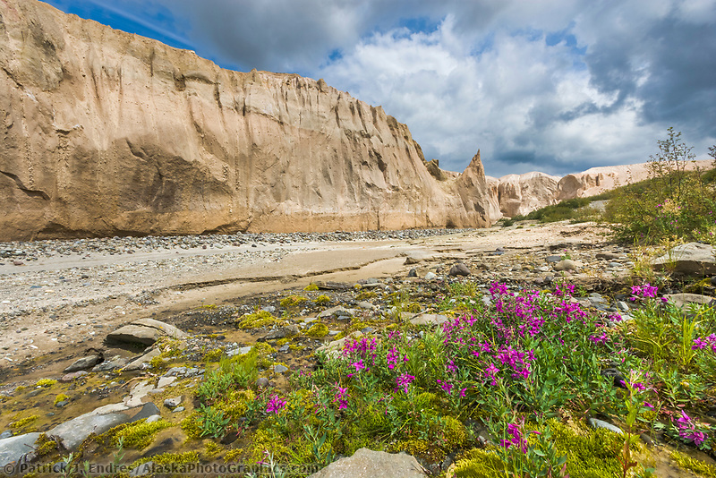 Dwarf fireweed and Ukak River, Valley of 10,000 smokes, Katmai National Park, Alaska. Ash landscape from the 1912 Novarupta volcano eruption.