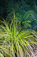 Chartreuse foliage ornamental grass; Sunset Western Garden Collection