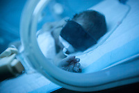 June 11, 2015 - Bekaa Valley, Lebanon: A new born Syrian baby lays inside an incubator at Rahme hospital in Taanayel city in east of Lebanon. The baby as many like him with Syrian roots was born stateless after their parents fled years ago from their hometowns in Syria when opposition armed groups started battling against the government of President Bashar Al-Assad. (Photo/Narciso Contreras)