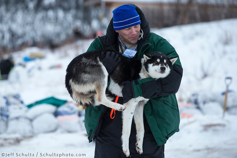 Volunteer vet Greg Reppas carries a dropped dog at the halfway checkpoint of Iditarod on Thursday March 7, 2013...Iditarod Sled Dog Race 2013..Photo by Jeff Schultz copyright 2013 DO NOT REPRODUCE WITHOUT PERMISSION