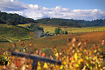 Vineyards in fall at Silver Oak Cellars, Alexander Valley, Sonoma County, California