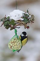 Kohlmeise, selbstgemachtes Vogelfutter, am Nuss-Säckchen, Nusssäckchen, Nuß-Säckchen, Nussäckchen, Erdnüsse, Erdnuss-Säckchen, Erdnusssack, Erdnuß, Vogelfütterung, Fütterung, Kohl-Meise, Meise, Meisen, Parus major, Great tit, bird's feeding, snow, La Mésange charbonnière