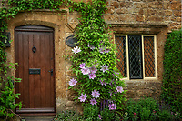 Clematis and cottage. The Cotswolds, England