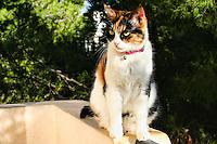 A beautiful kitten