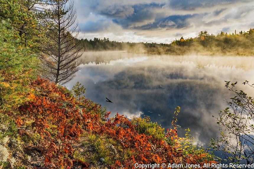 Ferns on shoreline of Tahquamenon River at sunrise, near Paradise, Michigan, Upper Peninsula of Michigan.