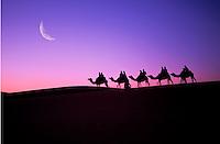Camel caravan. Egypt.