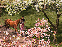 Springtime Paddock