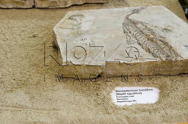 Fóssil de Stereosternum tumidum (Réptil aquático, Formação Irati, Permiano, Itapetininga - SP. Museu Geológico Valdemar Lefèvre, São Paulo - SP, 07/2014.