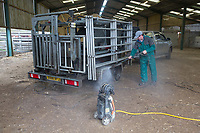 Pressure washing a mobile foot trimming crush <br /> Picture Tim Scrivener 07850 303986<br /> &hellip;.covering agriculture in the UK&hellip;.