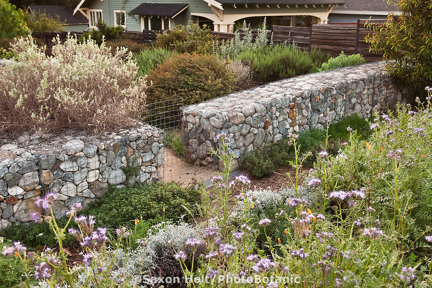 Rock wall gabion in front yard Southern California, drought tolerant naturalistic habitat native plant garden