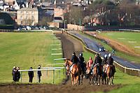 Newmarket Training Gallops