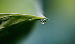 Dewdrops in a local garden