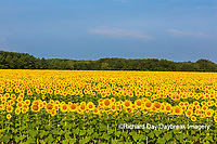 63801-07608 Sunflower field Sam Parr State Park Jasper County, IL