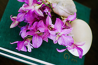 Pink Dendrobium orchid flowers are displayed in simple shells on the living room table