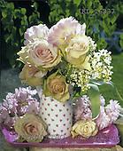 Interlitho, Alberto, FLOWERS,  photos, roses, pink plate, KL16337,#F# Blumen, Natur, flores, naturaleza
