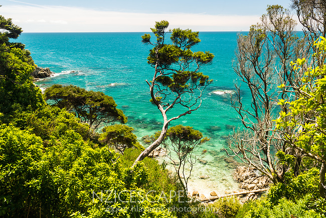 Crystal clear, turquoise waters of  sea near Anapai Bay on Abel Tasman Coast Track, Abel Tasman National Park, Nelson Region, South Island, New Zealand