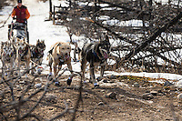 Linwood Fiedler runs in a burned out section of the trail after leaving the Rohn checkpoint on the way to Rohn   March 5, 2013.