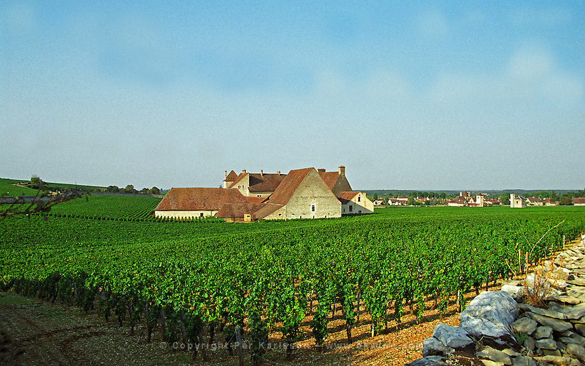 The Clos de Vougeot 16th century monastery and vineyard from behind, Bourgogne