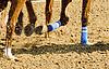 Nouveau Rich horseshoes on 7/2/12