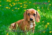 Marek, ANIMALS, REALISTISCHE TIERE, ANIMALES REALISTICOS, dogs, photos+++++,PLMP2980,#a#, EVERYDAY